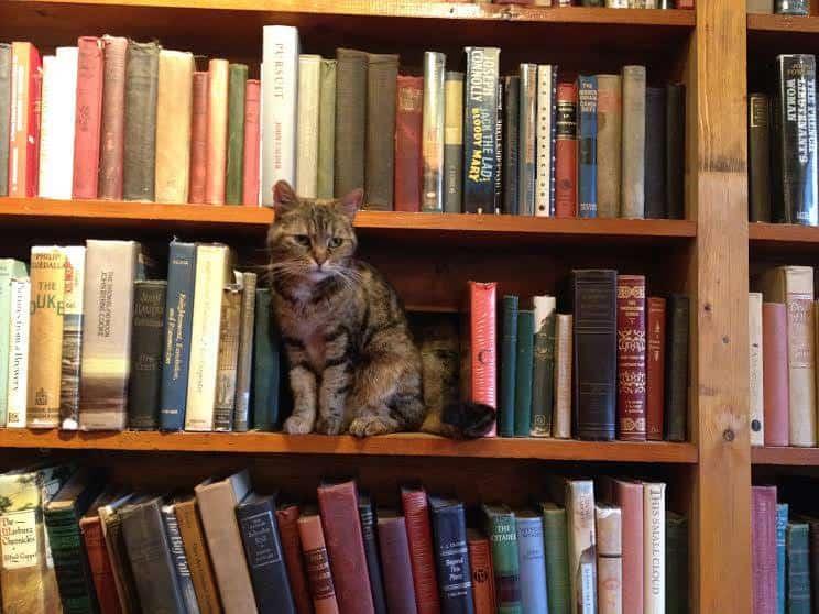 Livraria Shakespeare and Company: reduto para amantes da literatura em Paris