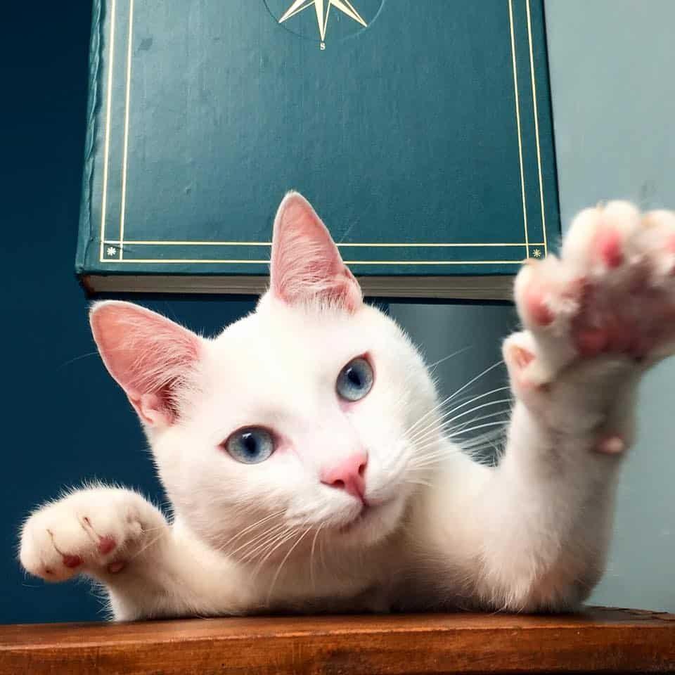 Romeow Cat Bistrot, em Roma, encanta clientes com seus gatos