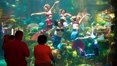 Bar em Las Vegas tem aquário gigante e apresentações com sereias