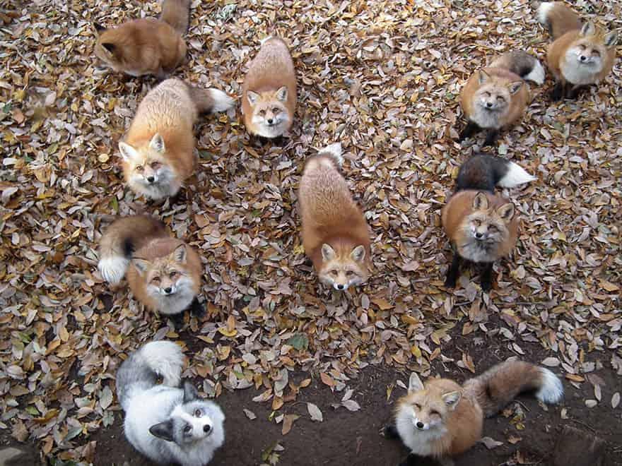 vila-raposa