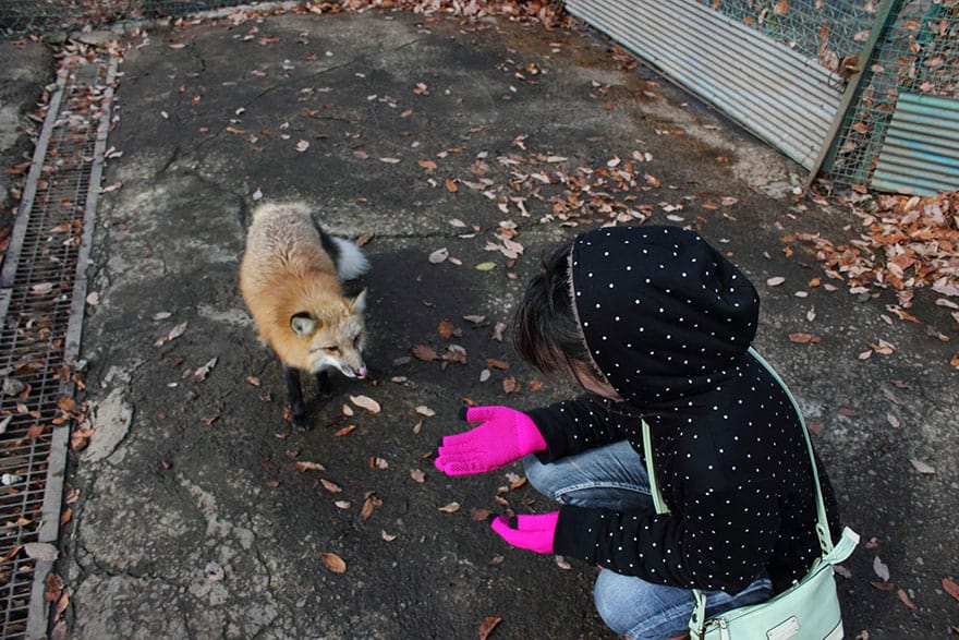 vila-raposa4