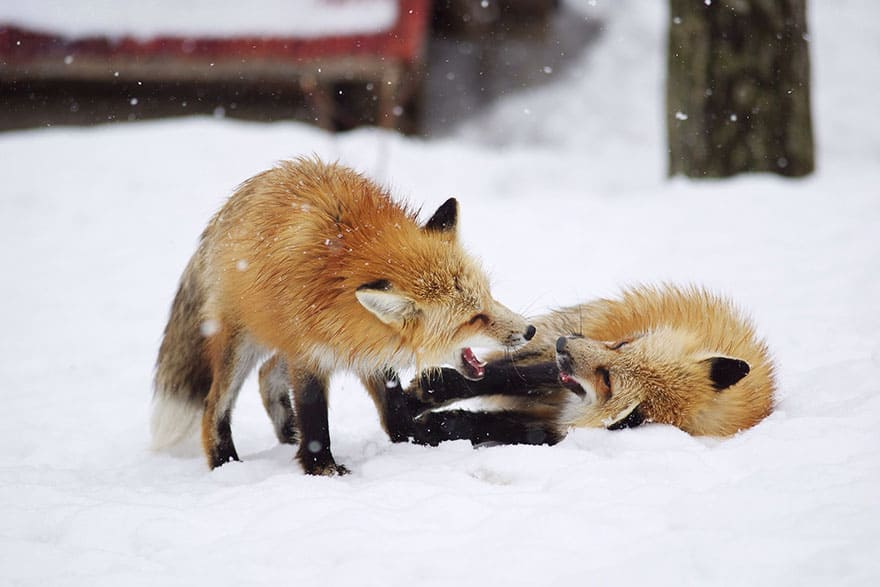 vila-raposa9