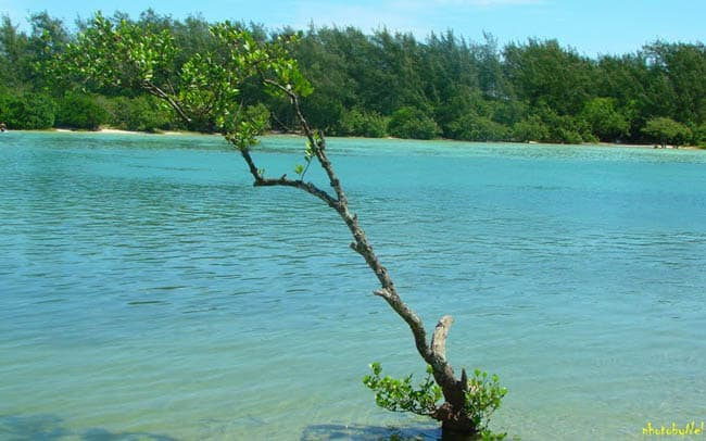 ilha-do-japones4
