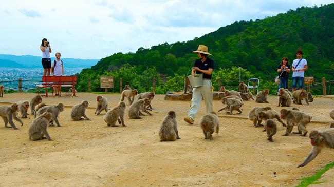 Arashiyama-Monkey-Park-45782