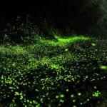 Parque de vaga-lumes encanta turistas na China