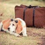 O que fazer com seu animal de estimação quando for viajar?