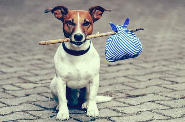 cachorro viagens2