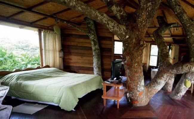 casas na árvore no Brasil 2