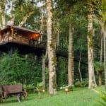 7 casas na árvore no Brasil para se hospedar e conhecer