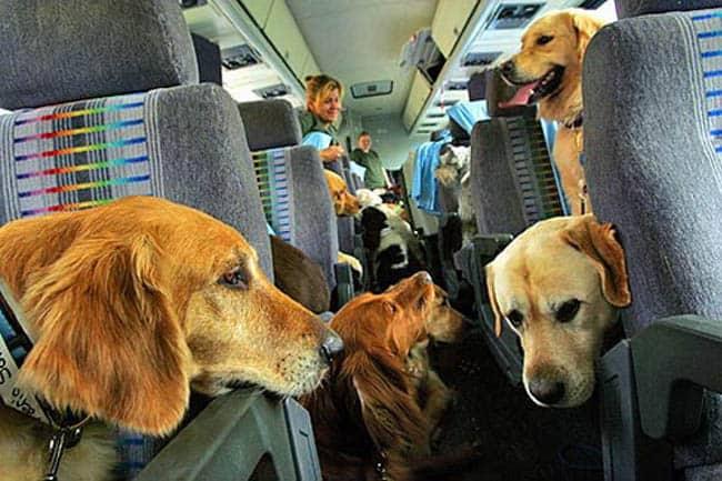 dog-travel-2