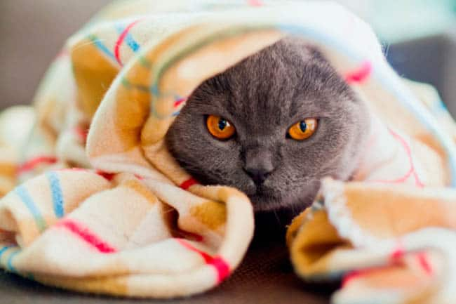 gato viagem