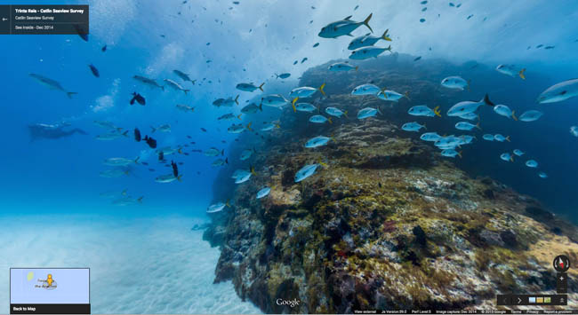 peixes Fernando de Noronha no Google Street View