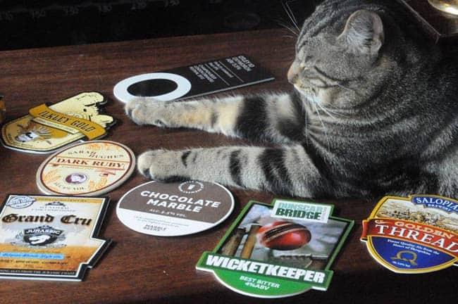 Em Bristol, bar coloca gatos para circular entre os clientes
