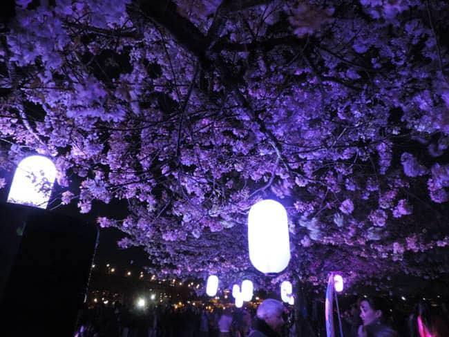 festival-cerejeiras-Canada10