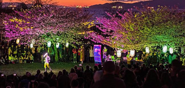 festival-cerejeiras-Canada11