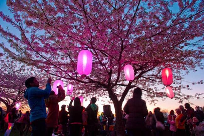 festival-cerejeiras-Canada9