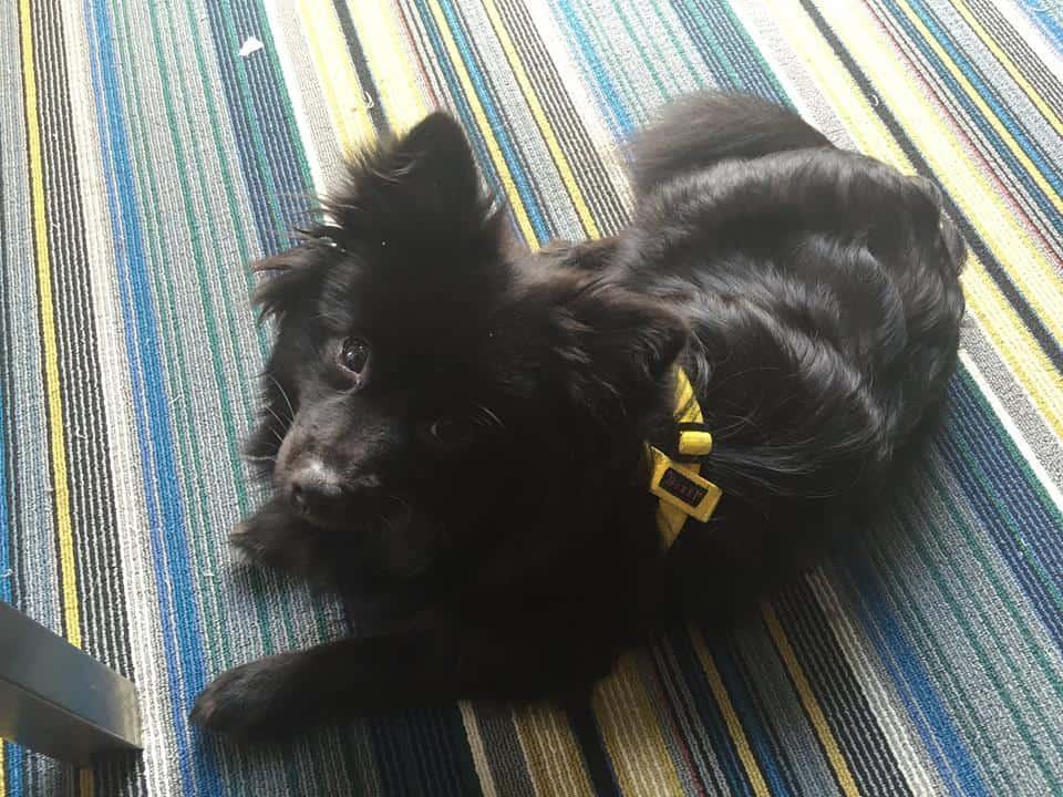 Hotel incentiva a adoção de cães abandonados no Estados Unidos