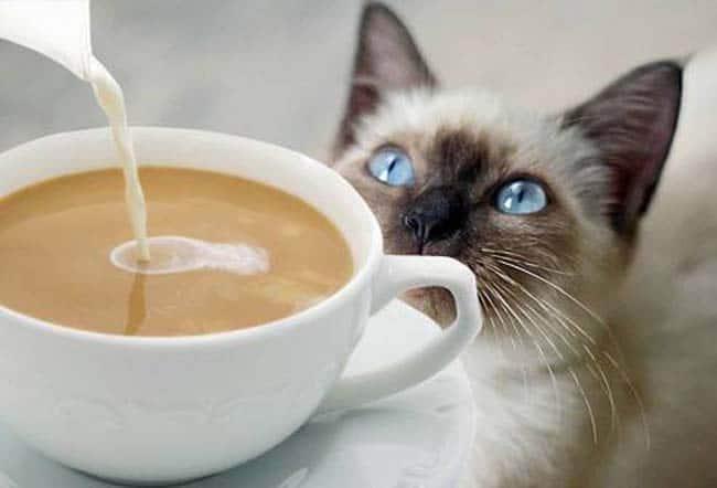 Um gole e um cafuné: conheça os cat cafés do Japão