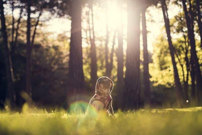 Não quer deixar seu cãozinho num hotel enquanto viaja? Conheça o DogHero!