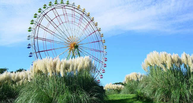 hitachi-seaside-park11