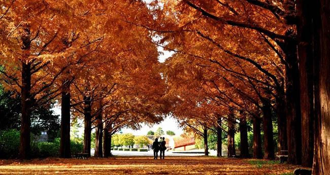 hitachi-seaside-park15