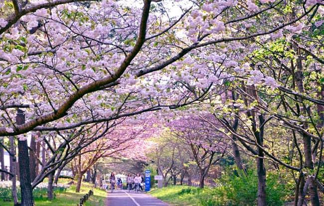 hitachi-seaside-park16