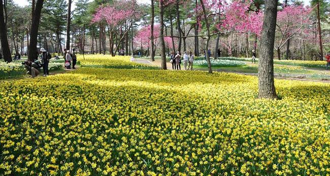 hitachi-seaside-park2