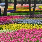 A Primavera nunca acaba no deslumbrante e colorido Hitachi Seaside Park, no Japão