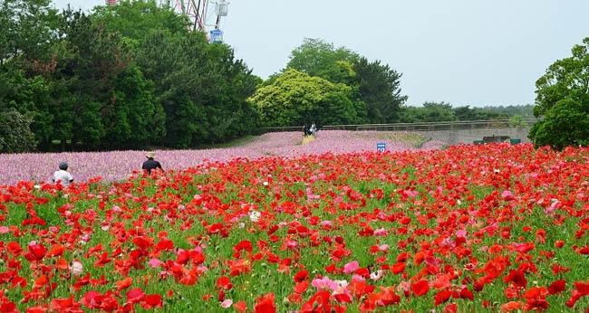 hitachi-seaside-park5