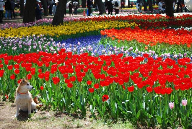 parque-flores-japao