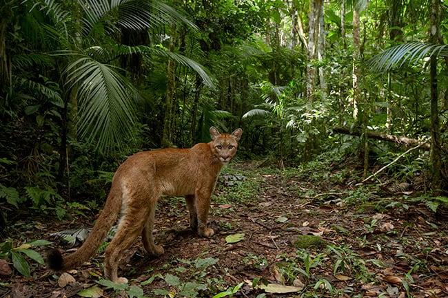 Reserva com espécies raras é aberta em São Paulo