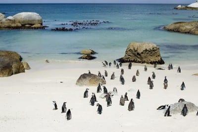 Já pensou em passar o inverno na África do Sul?