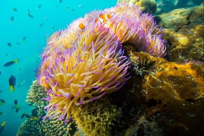 corais9