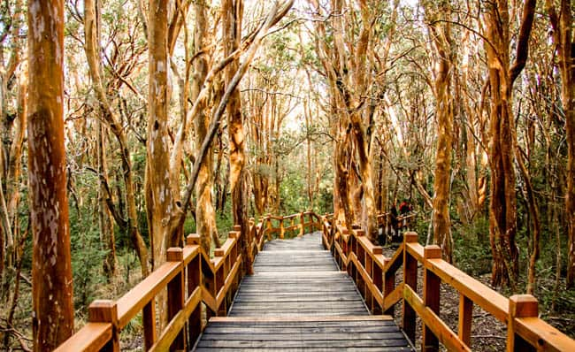 Parque Nacional Los Arrayanes2