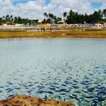 Maracaípe: passeio imperdível ao lado de Porto de Galinhas