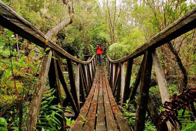 Parque Pumalin por Tierrasdemagia