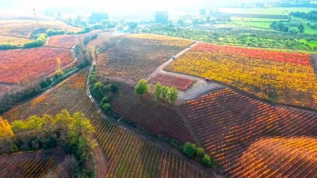 vinicolas-do-Chile
