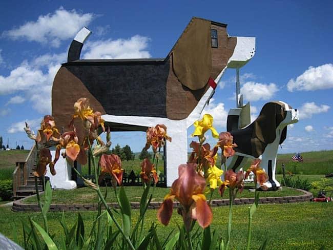 Sabia que você pode passar uma noite num Beagle gigante?