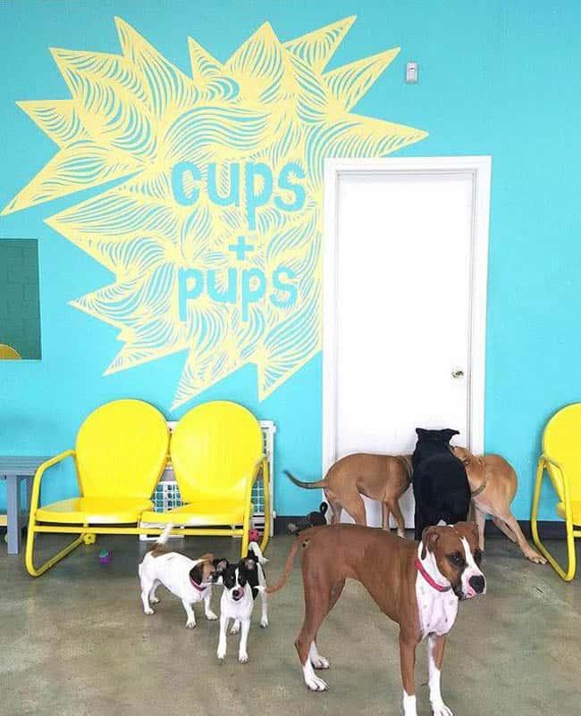 dog-cafe-los-angeles5
