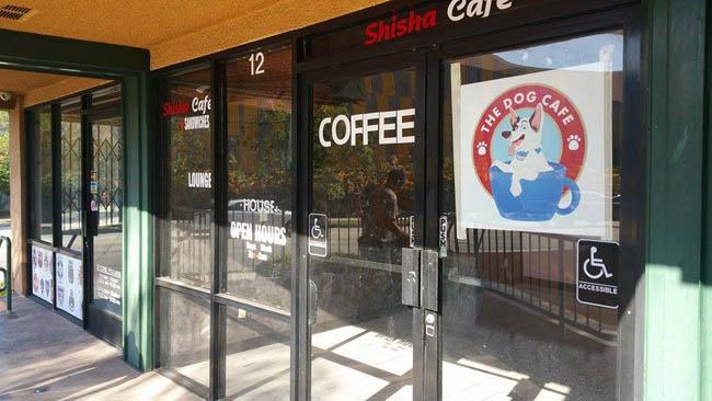 dog-cafe-los-angeles6