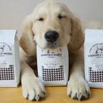 Com cachorros para adoção, The Dog Café faz sucesso em Los Angeles