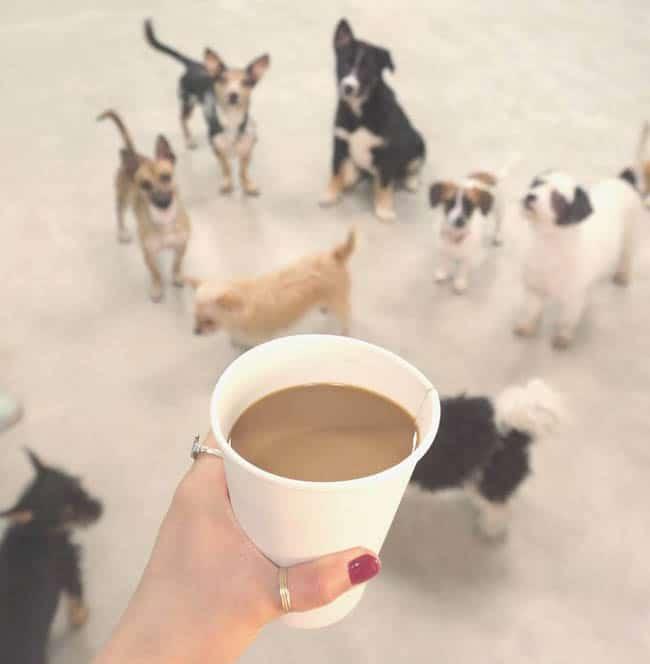 dog-cafe-los-angeles8