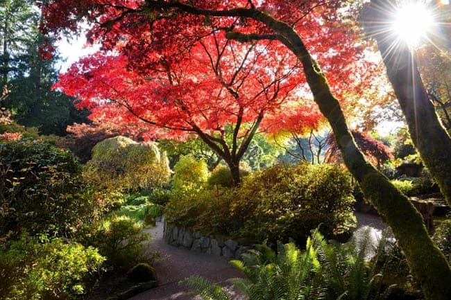 jardins-de-butchart4