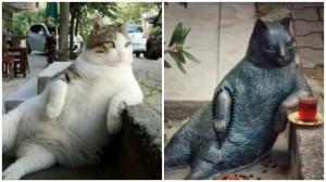 Istambul tem estátua do 'gato mais tranquilo do mundo'