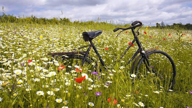 airbnb-para-bikes