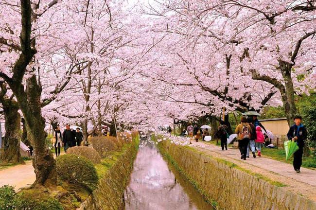 kyoto-primavera