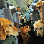 11 perguntas para fazer antes de levar seu pet para viajar