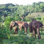 Chapada dos Guimarães terá o primeiro santuário de elefantes do Brasil