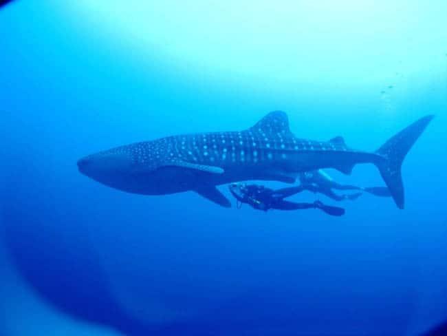 maldivas7