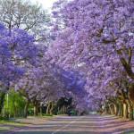 8 lugares para conhecer na África do Sul na sua próxima viagem